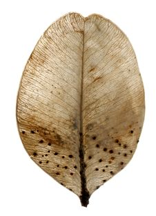 Free Round Leaf Stock Photography - 18925002