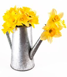 Free Daffodil Flowers. Royalty Free Stock Photography - 18925957