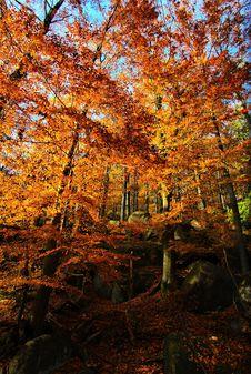 Free Autumn In Jizera Mountains Stock Image - 18927121