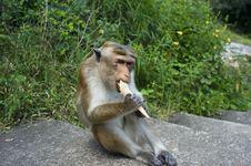 Free Monkey Stock Images - 18928024