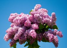 Free Bouquet From Lilac Royalty Free Stock Photography - 18928647