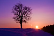 Free Lonely Tree At Sunset Royalty Free Stock Photography - 18928867