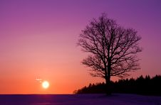 Free Lonely Tree At Sunset Royalty Free Stock Photos - 18929118