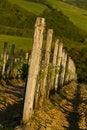 Free Italian Vineyard Royalty Free Stock Photography - 18931337