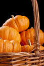 Free Pumpkins Royalty Free Stock Images - 18931579