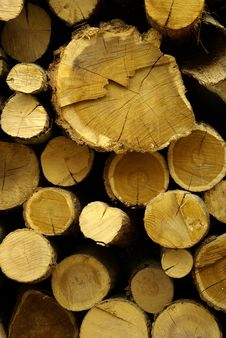 Free Timber, Logs, Firewood Royalty Free Stock Photos - 18930308