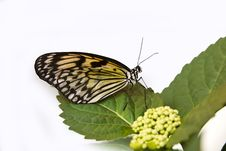 Free Butterfly Stock Image - 18934891