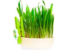 Flowerpot With Green Grass Royalty Free Stock Images