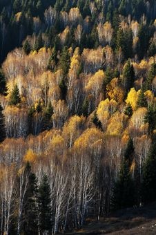 Free Golden Autumn Forest Royalty Free Stock Images - 18937629
