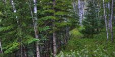 Free Forest In HDR Stock Image - 18938411