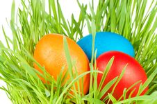 Free Egg Easter In A Grass Isolated On White Stock Images - 18939014