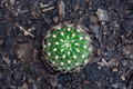 Free Cactus From Top View Stock Photos - 18943663