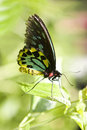 Free Sunny Day Butterfly Stock Image - 18944361