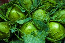 Free Cabbage Green Vegetable Stock Photos - 18940633