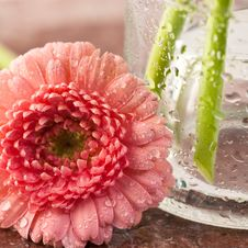 Free Pink Gerbera Royalty Free Stock Photography - 18941557