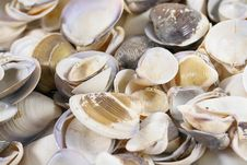 Free Shells Stock Images - 18943134