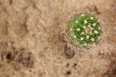 Free Cactus From Bug Eye View Royalty Free Stock Images - 18943699