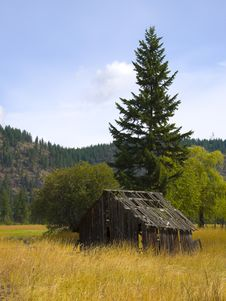 Free Old Barn In Golden Field Stock Photo - 18946690