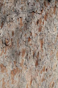 Free Tree Bark Royalty Free Stock Photo - 18947055