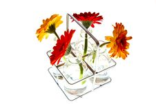 Free Tray With Springflowers Royalty Free Stock Image - 18947506