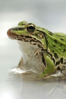 Free Green Frog Royalty Free Stock Photos - 18948598
