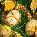 Free Easter Eggs Hidden In The Grass Stock Image - 18950931