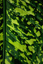 Free Tropical Leaf Royalty Free Stock Image - 18956486