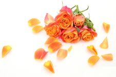 Free Fine Roses Stock Photography - 18952272