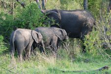Free Baby Elephants With Their Mother Stock Photography - 18954452