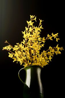 Free Forsythia Flower Royalty Free Stock Image - 18955036