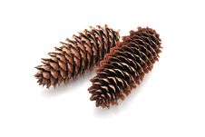 Free Pine Cones. Stock Photos - 18956493
