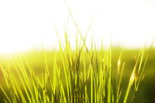 Grass In Sunlight Stock Images
