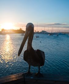 Pelican In The Marina At Sunset Stock Images