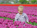 Free Boy In Tulip Field Stock Photo - 18966660