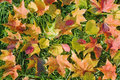Free Autumn Leaves Royalty Free Stock Photography - 18968707