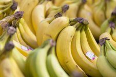 Free Bananas Royalty Free Stock Photo - 18960505
