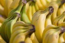 Free Bananas Royalty Free Stock Photos - 18960508