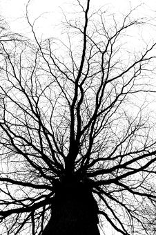 Free Tree Stock Photos - 18962323