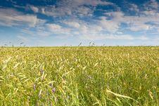 Free Green Grass Under Blue Bright Sky Stock Photos - 18963253