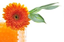Free Gerbera Stock Photography - 18963502
