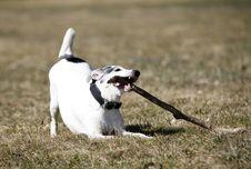 Free Doggy Stock Photo - 18965200