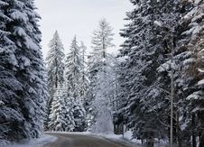 Free Winter Road Royalty Free Stock Images - 18965519