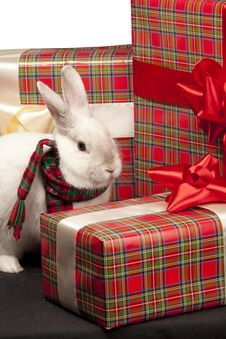 Free Fluffy Rabbit Rounded By Giftbox Stock Image - 18965911