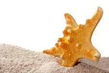 Free Golden Starfish Stock Image - 18966111
