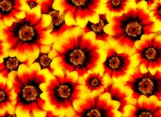Free Red And Yellow Flowers Stock Images - 18966984