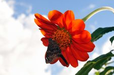 Free Butterfly And Flower Royalty Free Stock Photography - 18967477