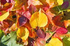 Free Autumn Leaves Stock Images - 18968174