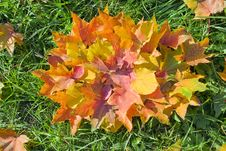Free Autumn Leaves Royalty Free Stock Photos - 18968428