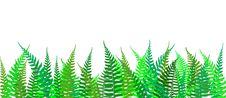 Color Fern Background Royalty Free Stock Photo