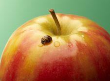 Free Ladybug Stock Photos - 18969653